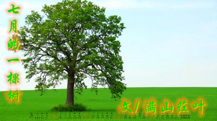 七月的一棵树