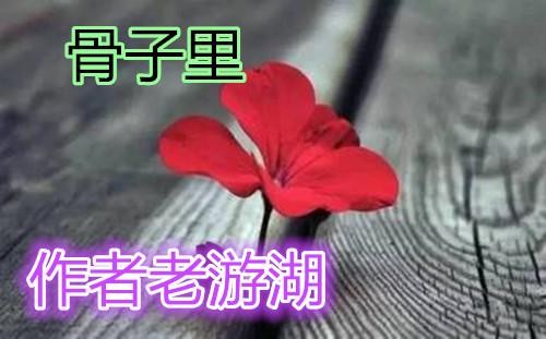 【室雅兰香】骨子里(微小说)
